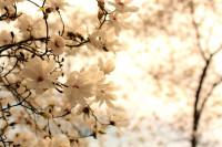 Цветы_20958
